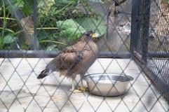 Snake eagle Royalty Free Stock Photos