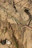 Snake eggs Stock Photos