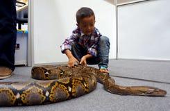 Snake Royalty Free Stock Photography