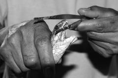 Snake extracting venom teeth toxic black white Stock Photos