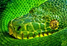 Snake Eye. A green snake curled up