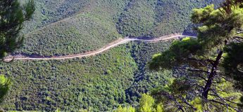 Snake forest road Royalty Free Stock Images
