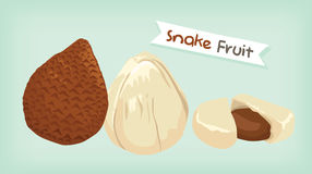 Snake fruit vector Royalty Free Stock Image