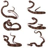 Snake-Gaboon Viper Royalty Free Stock Image