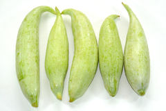 Snake Gourd Stock Photography