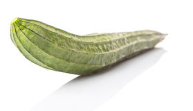 Snake Gourd Vegetable III Royalty Free Stock Image