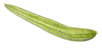 Snake Gourd Vegetable IV Royalty Free Stock Photography