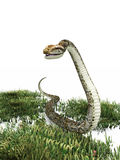 Snake in the grass Royalty Free Stock Photography