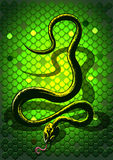 Snake green Royalty Free Stock Photography