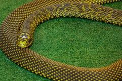 Snake on green backgrounds. Snake in serpentarium on green backgrounds Royalty Free Stock Photos