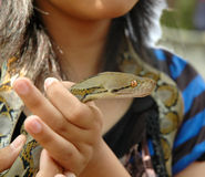 Snake in hand Royalty Free Stock Photography