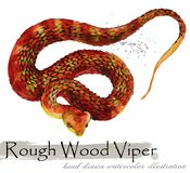 Snake hand drawn watercolor illustration. Rough Wood Virer royalty free stock images