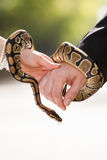 Snake in the hand Royalty Free Stock Photo