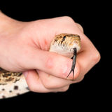 Snake in hand Stock Photos