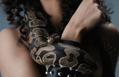 Snake on the hand of human. royalty free stock images