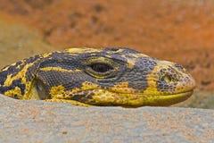 Snake head Royalty Free Stock Image