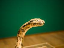 Snake head close up. Focus on eye Stock Photo