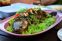 Snake-head fish Deep Fried serve with Herb and Spicy Sauce Stock Images