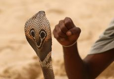 Snake head and human fist Stock Photos