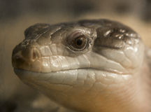Snake head. Picture of a snake head Stock Photo
