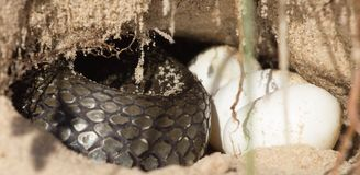 Snake in a hole Stock Photography