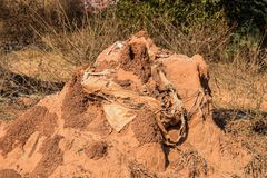 Snake house made up of red colored mud or soil stock photography