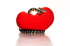Snake hugging a red heart on a white background Stock Photos