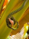Snake hunting frog Stock Photos