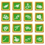 Snake Icons Set Green Square Royalty Free Stock Images