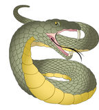 Snake, illustration Stock Photography