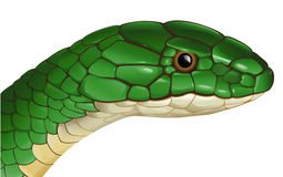 Snake. Illustration of a generic snake on a white background Royalty Free Stock Photography