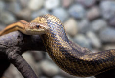 Snake In City Zoo Stock Images