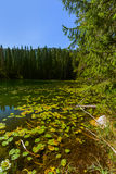 Snake Lake in Durmitor - Montenegro Royalty Free Stock Photography