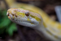 Snake. royalty free stock photography