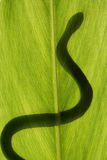 Snake on leaf Royalty Free Stock Photos