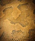 Snake leather Royalty Free Stock Photos