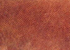 Snake leather Stock Image