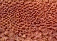 Snake leather Stock Image