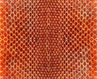 Snake leather Stock Images