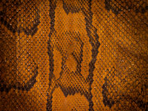 Snake Leather Background Royalty Free Stock Photo