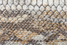 Snake leather Royalty Free Stock Photography