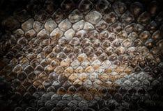 Snake leather Stock Photos