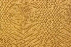 Snake leather skin imitation Stock Images