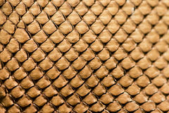 Snake leather texture Stock Image