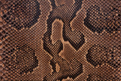 Snake leather texture Stock Photos