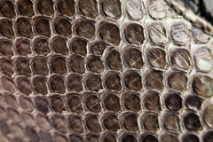 Snake leather texture Royalty Free Stock Photography