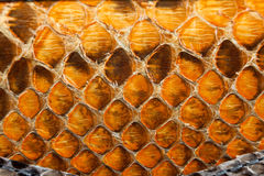 Snake leather texture Royalty Free Stock Photo