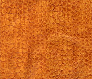 Snake leather texture Royalty Free Stock Images