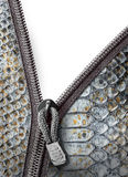 Snake leather with zipper Stock Photo
