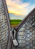 Snake leather with zipper Royalty Free Stock Images